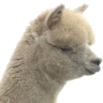 Moonacre Farm Alpacas